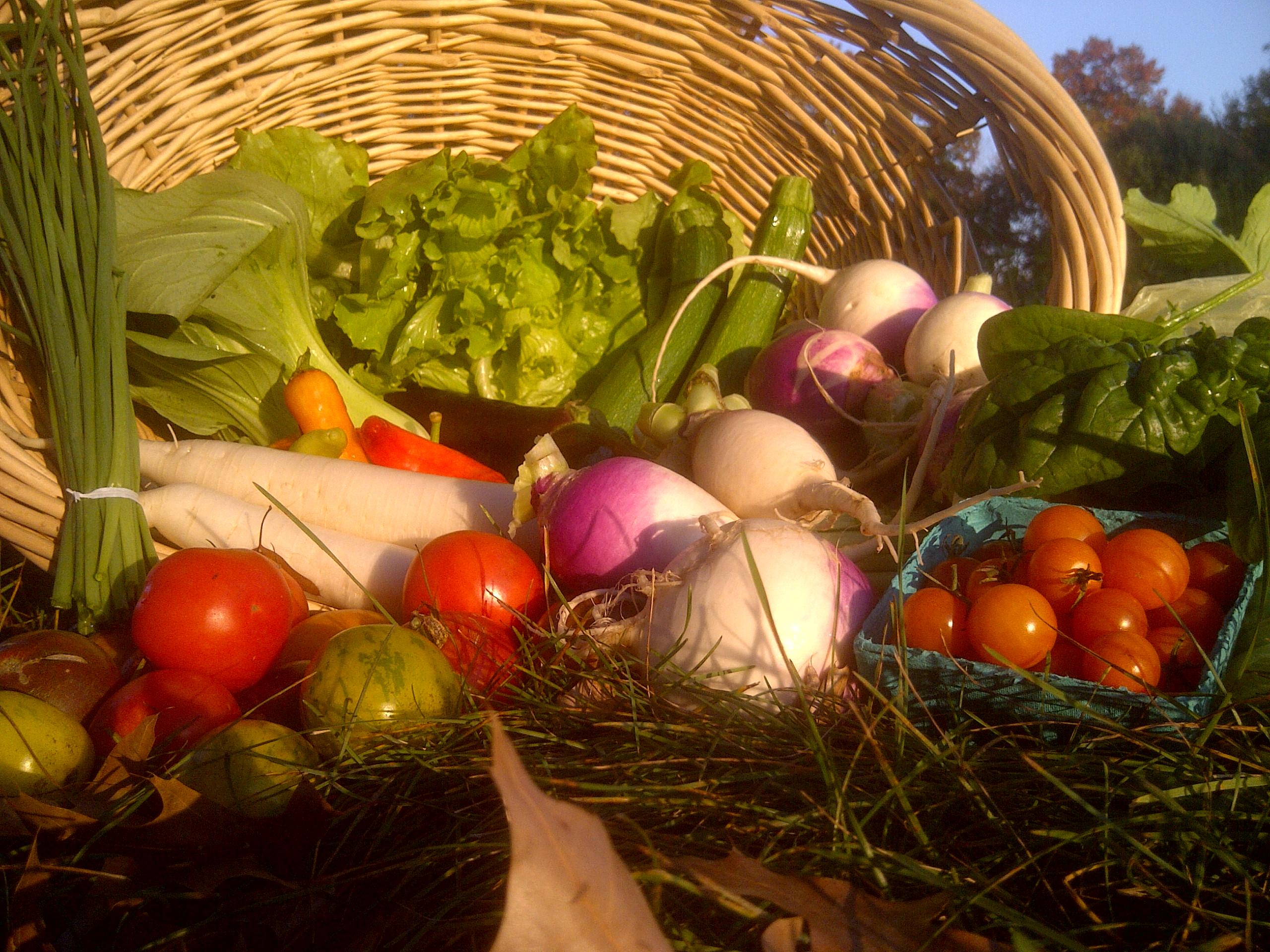 October 2012 – CAASTLC\'s Seeds of Hope Farm